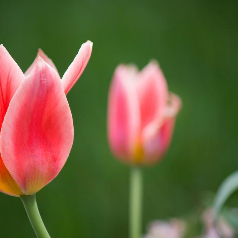 Pastor Calvin antwortet – Warum wir auf die Auferstehung Jesu nicht verzichten können
